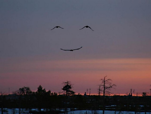 sourireoiseau.jpg